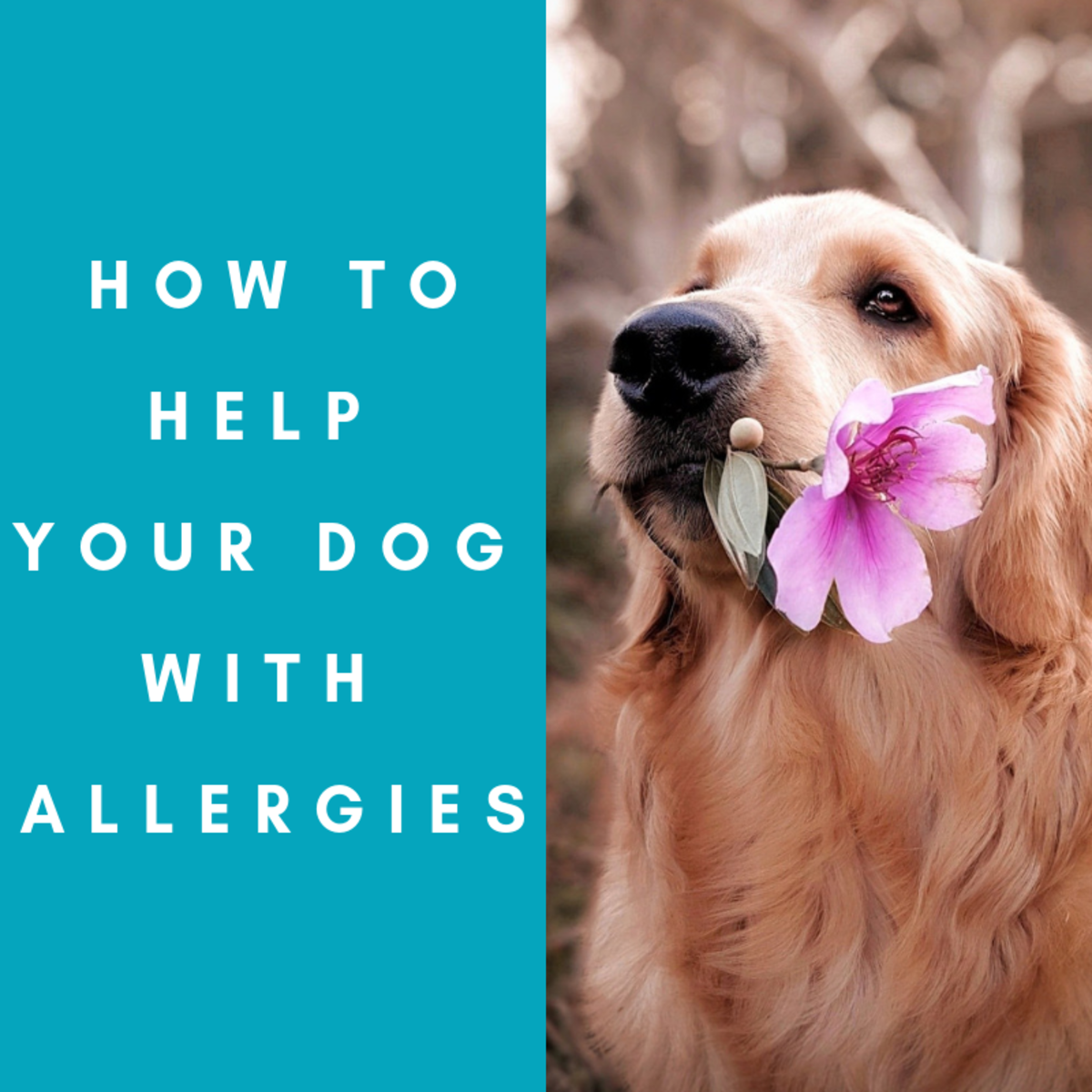 Ways to help alleviate allergic symptoms in dogs.