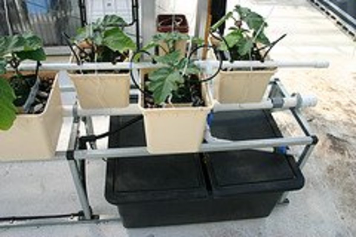 All You Need to Know About Hydroponics