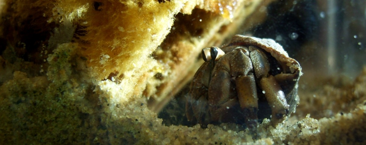 Why Hermit Crabs May Not Be Good Pets for Kids