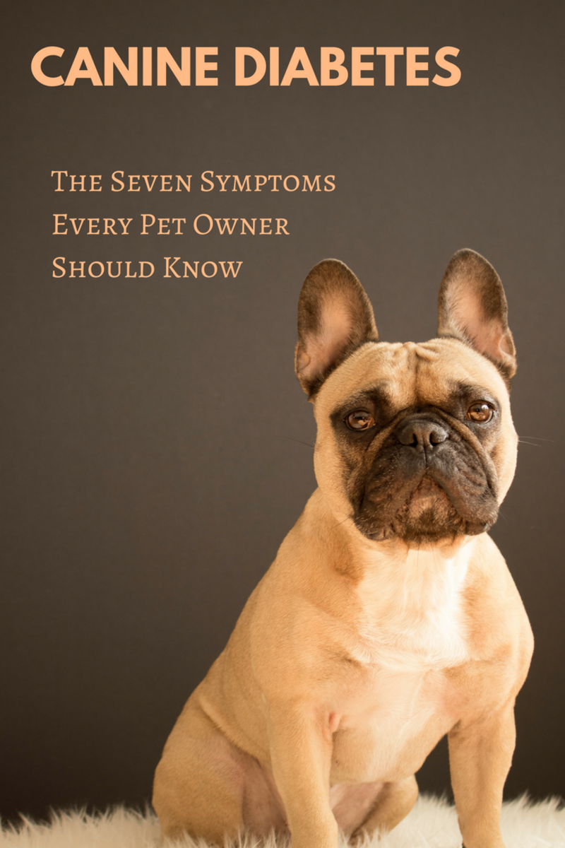 Do You Know These Seven Symptoms of Canine Diabetes?