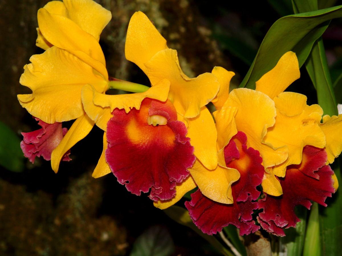 Visiting The Hawaii Tropical Botanical Garden Wanderwisdom
