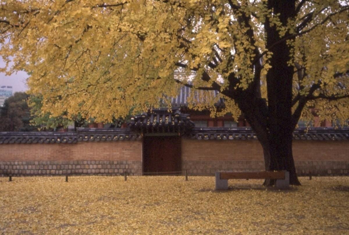 Gyeongbok Palace, Seoul,Korea.