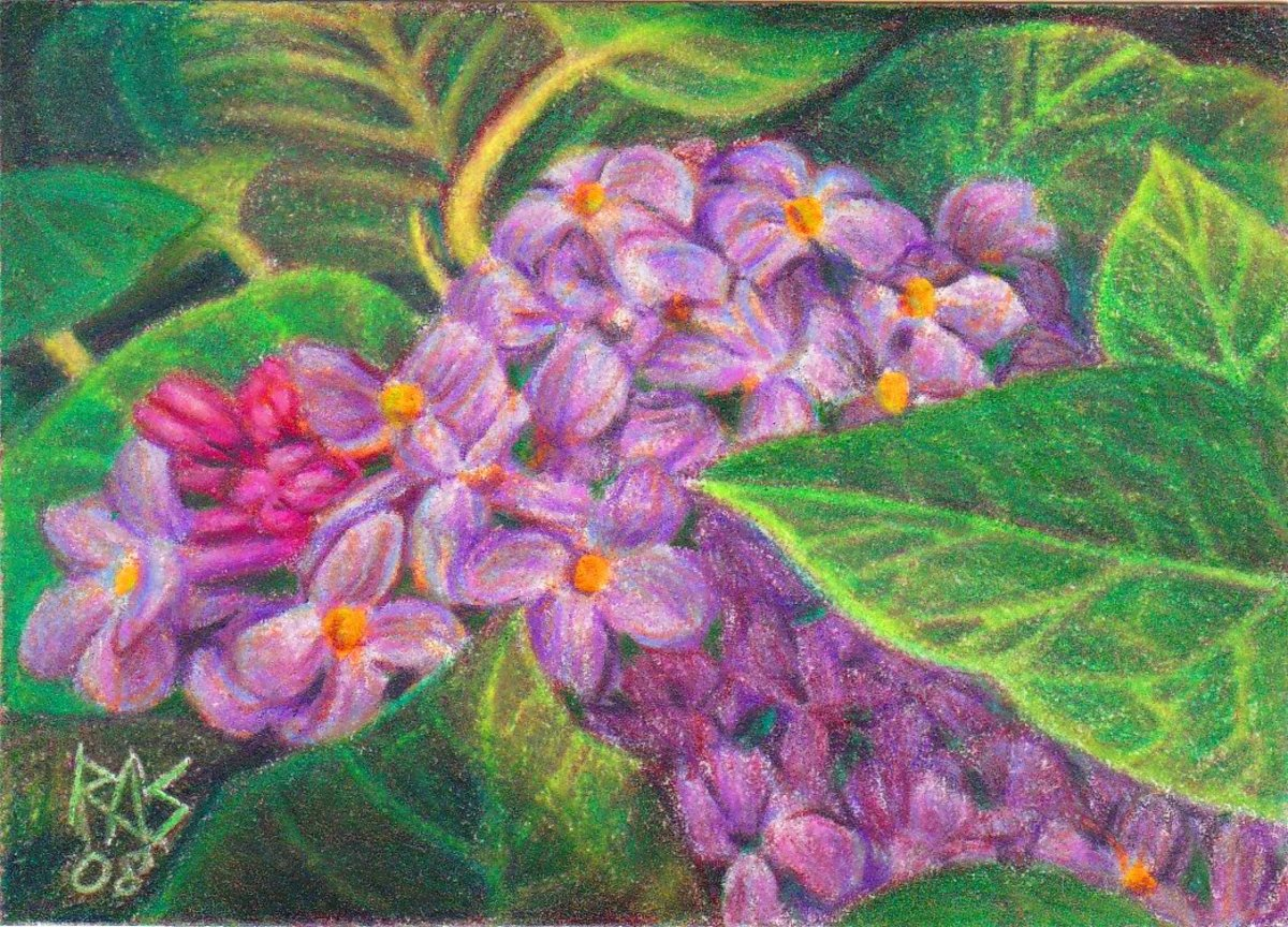 ACEO Lilacs in Prismacolor Premier on white Stonehenge paper by Robert A. Sloan
