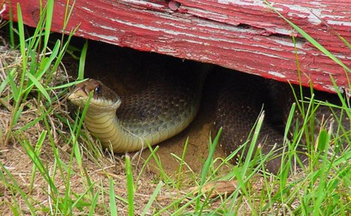 Dry-stack rock piles (no mortar) are great for attracting snakes, because these piles provide both dark crevices for hiding and sunny spots for snakes to soak up some warm rays.