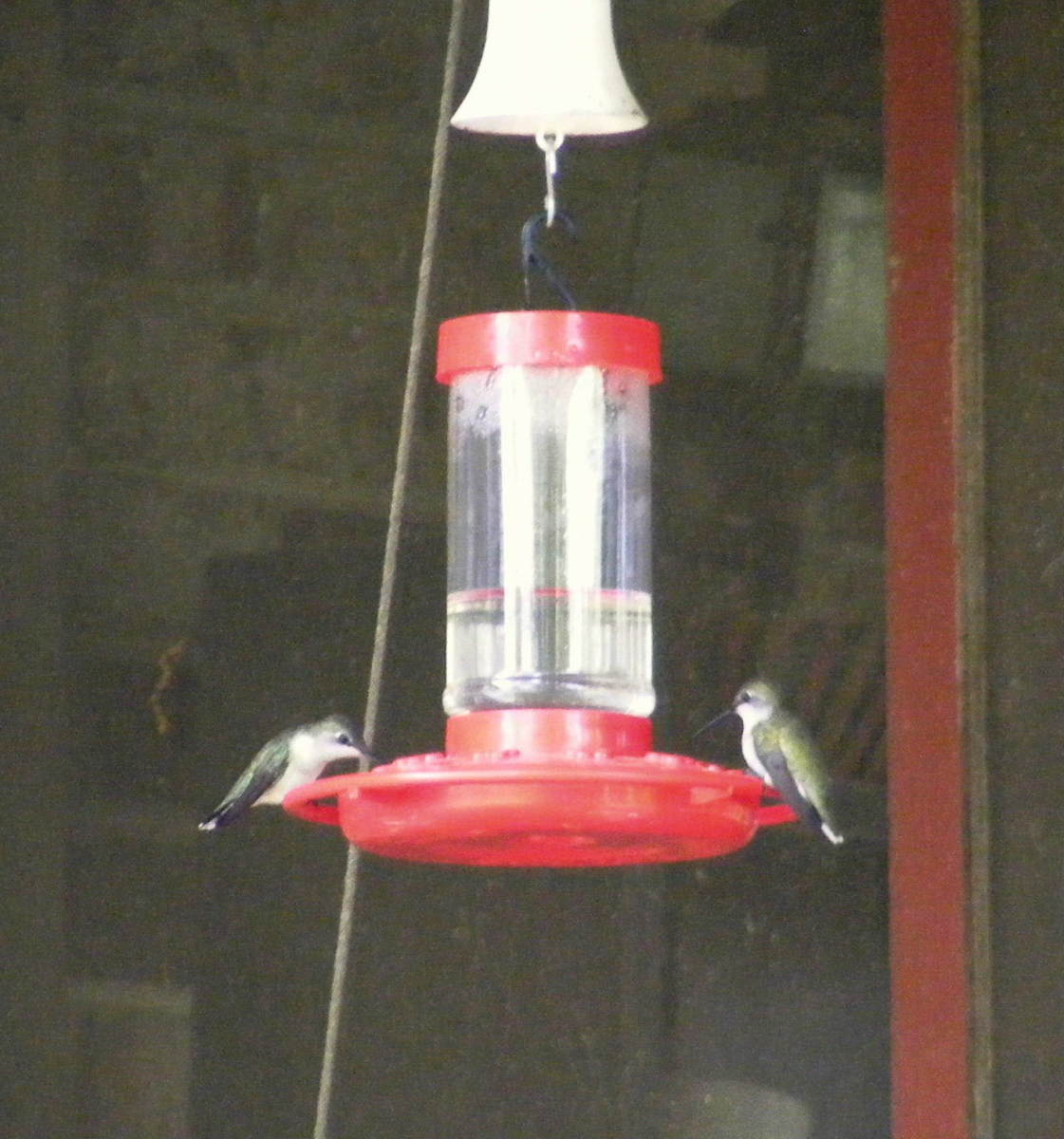 This article will break down all the information you need to know to set up a hummingbird feeder in your own garden.