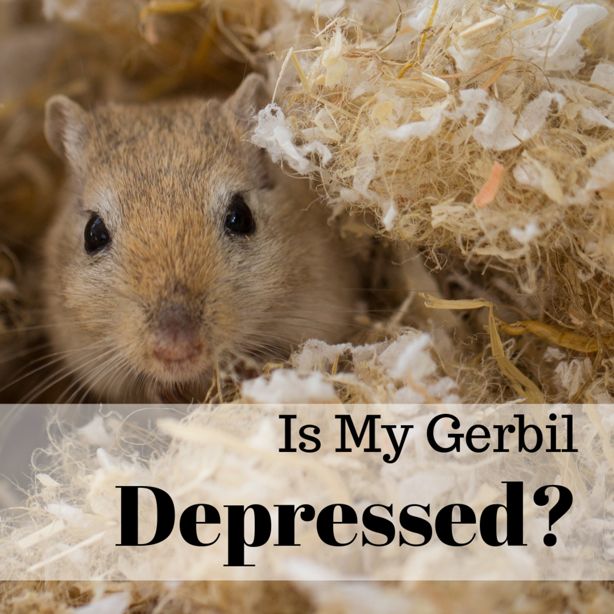 How to Identify and Help Depressed Gerbils