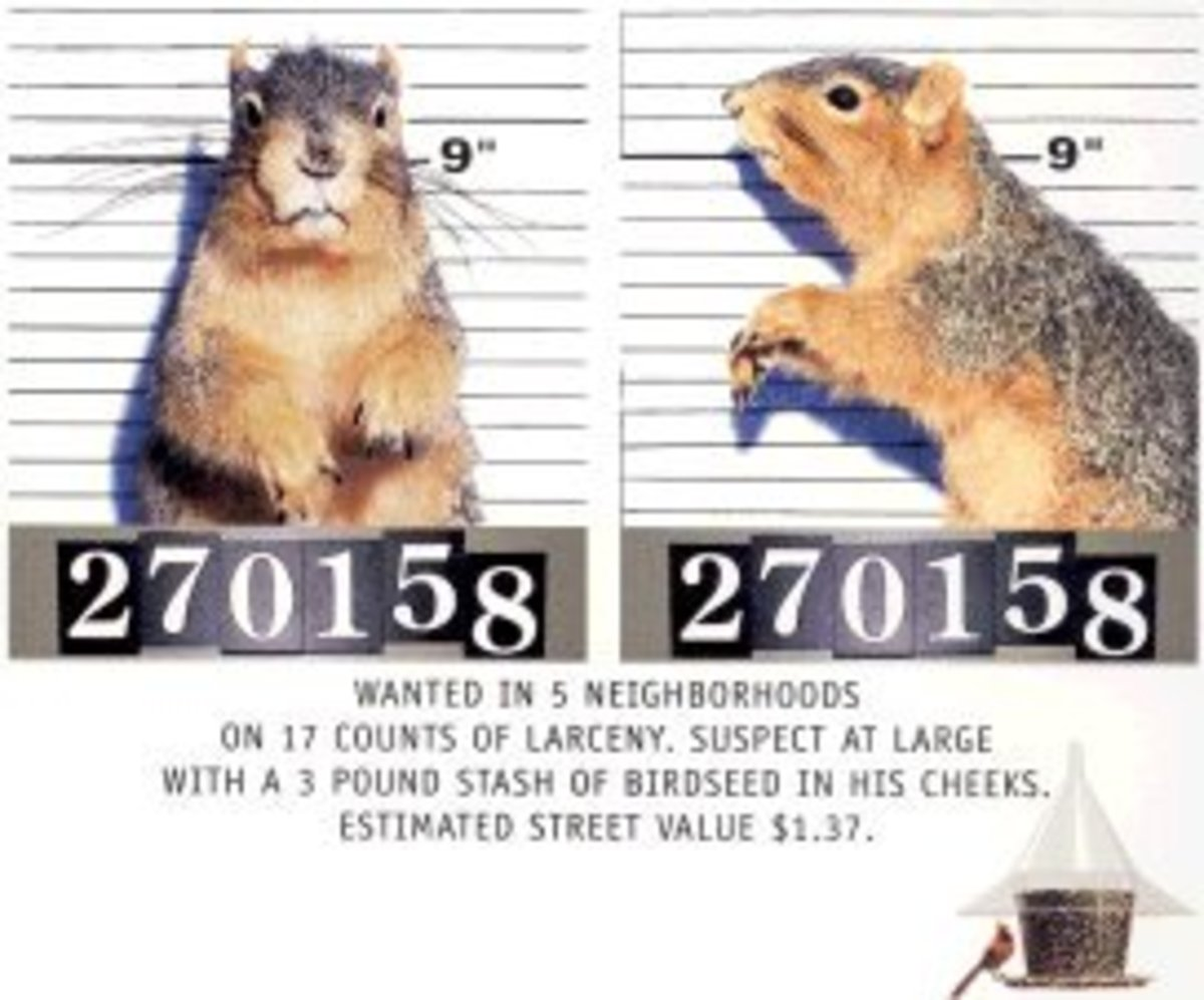 Squirrel Proof Bird Feeders and How To Beat and Defeat those Thieving Squirrels!