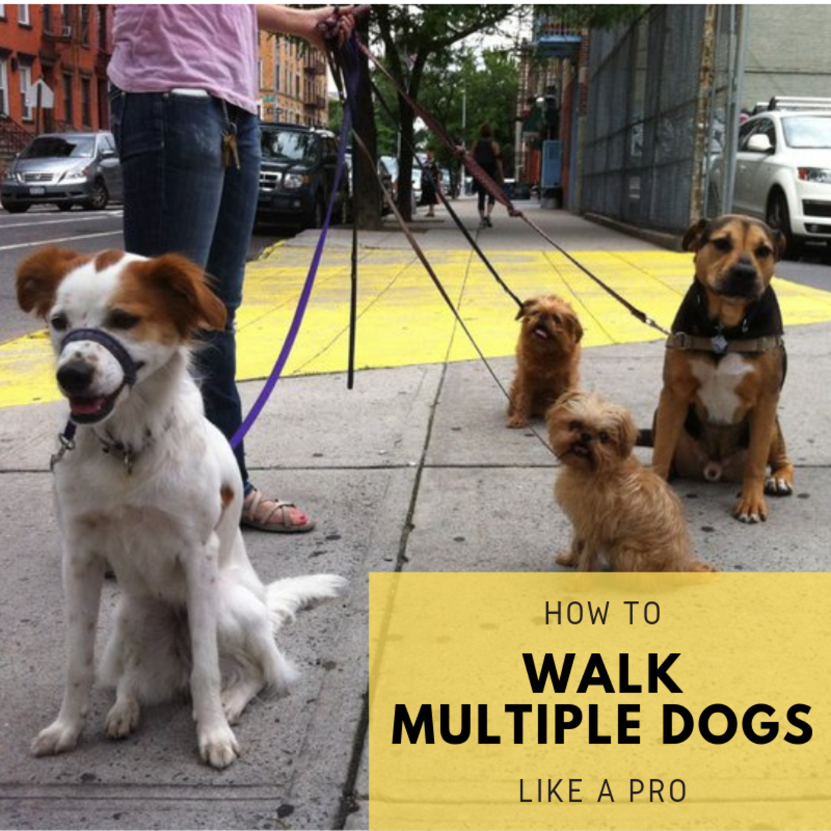 Learn how to manage a group of dogs like professional dog-walkers do!