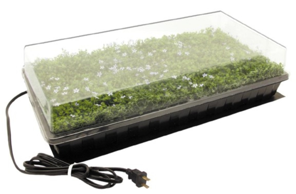 Mini greenhouses can help speed up germination.