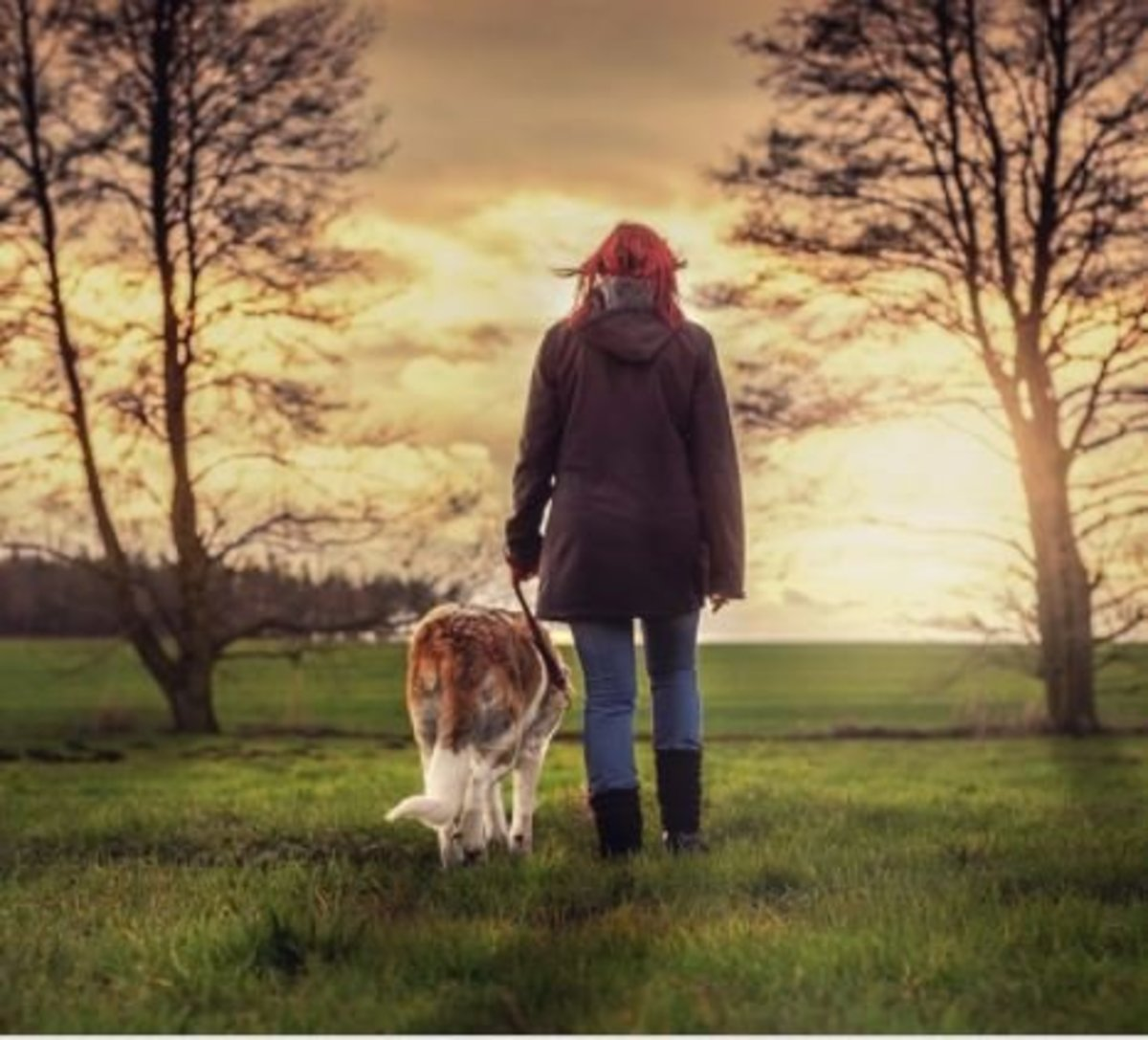 Exercise Solutions for Lazy or Busy Dog Owners