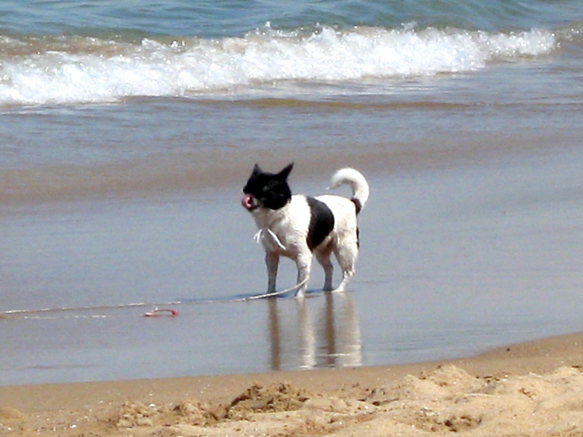 keeping-your-dog-safe-at-the-beach