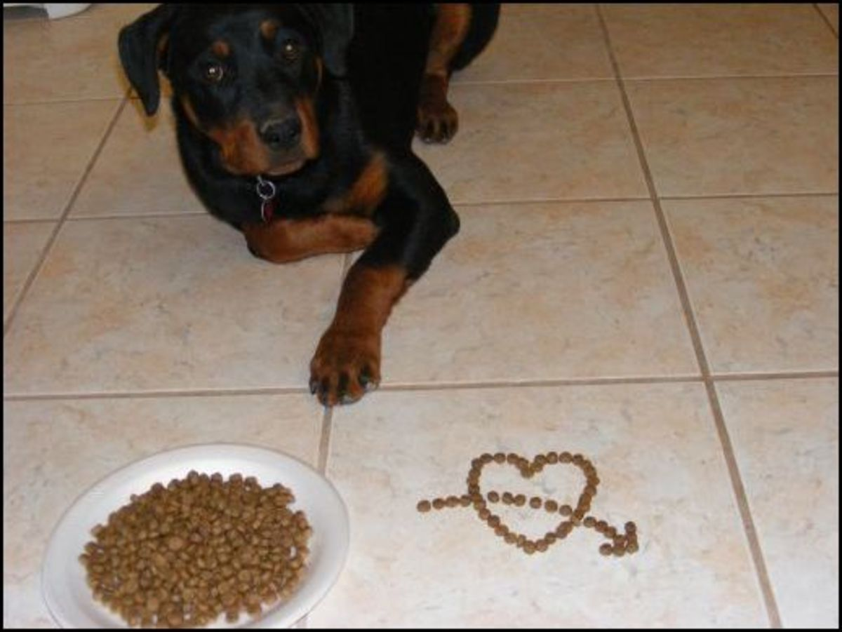 how-to-make-a-dog-food-aggressive