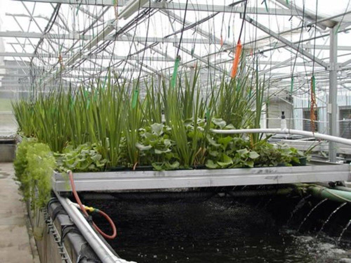 Great ecosystem, recirculating hydroponics system
