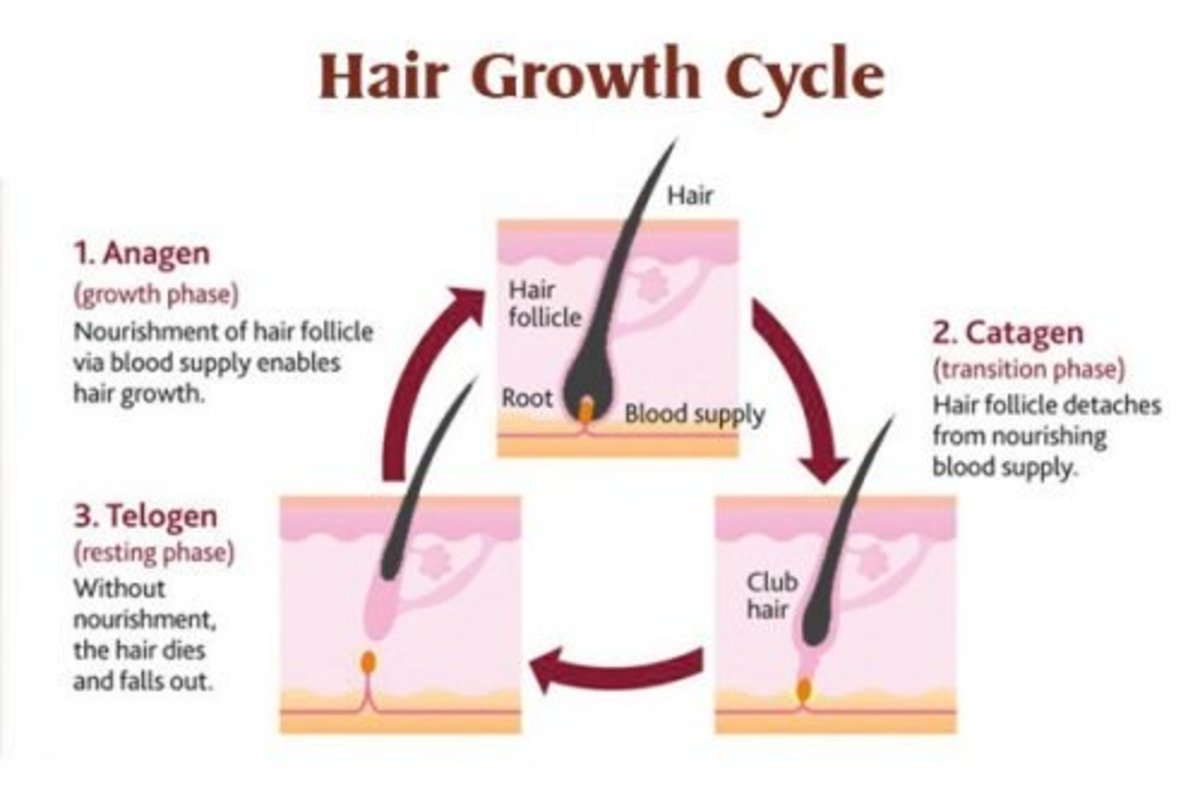 The hair growth cycle consists of three phrases.