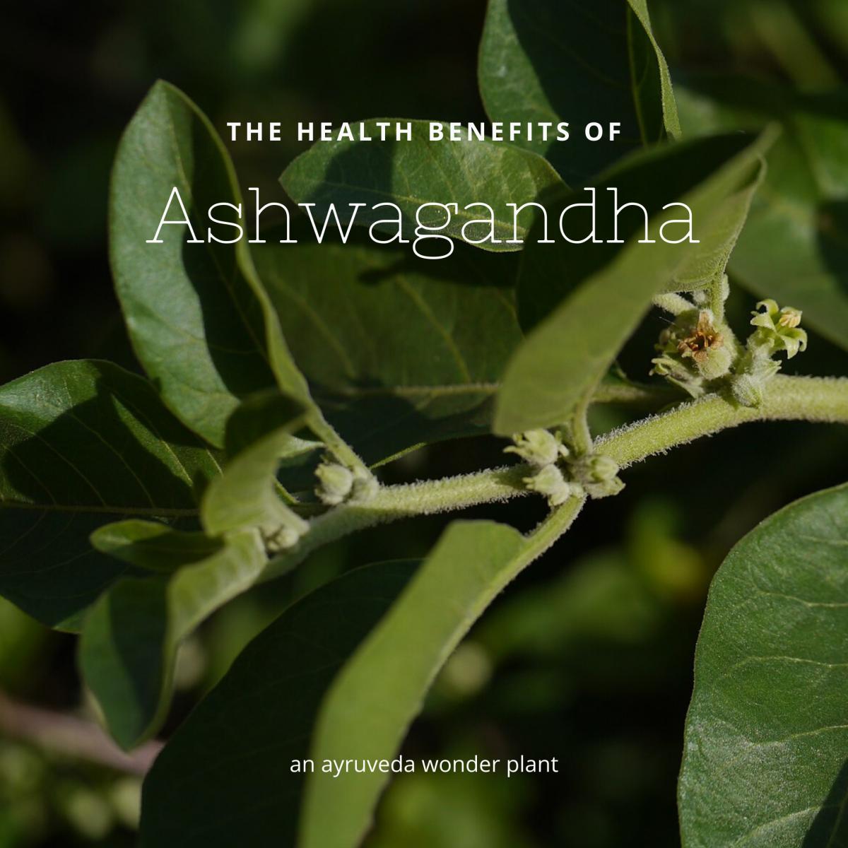 The Health Benefits of Ashwagandha