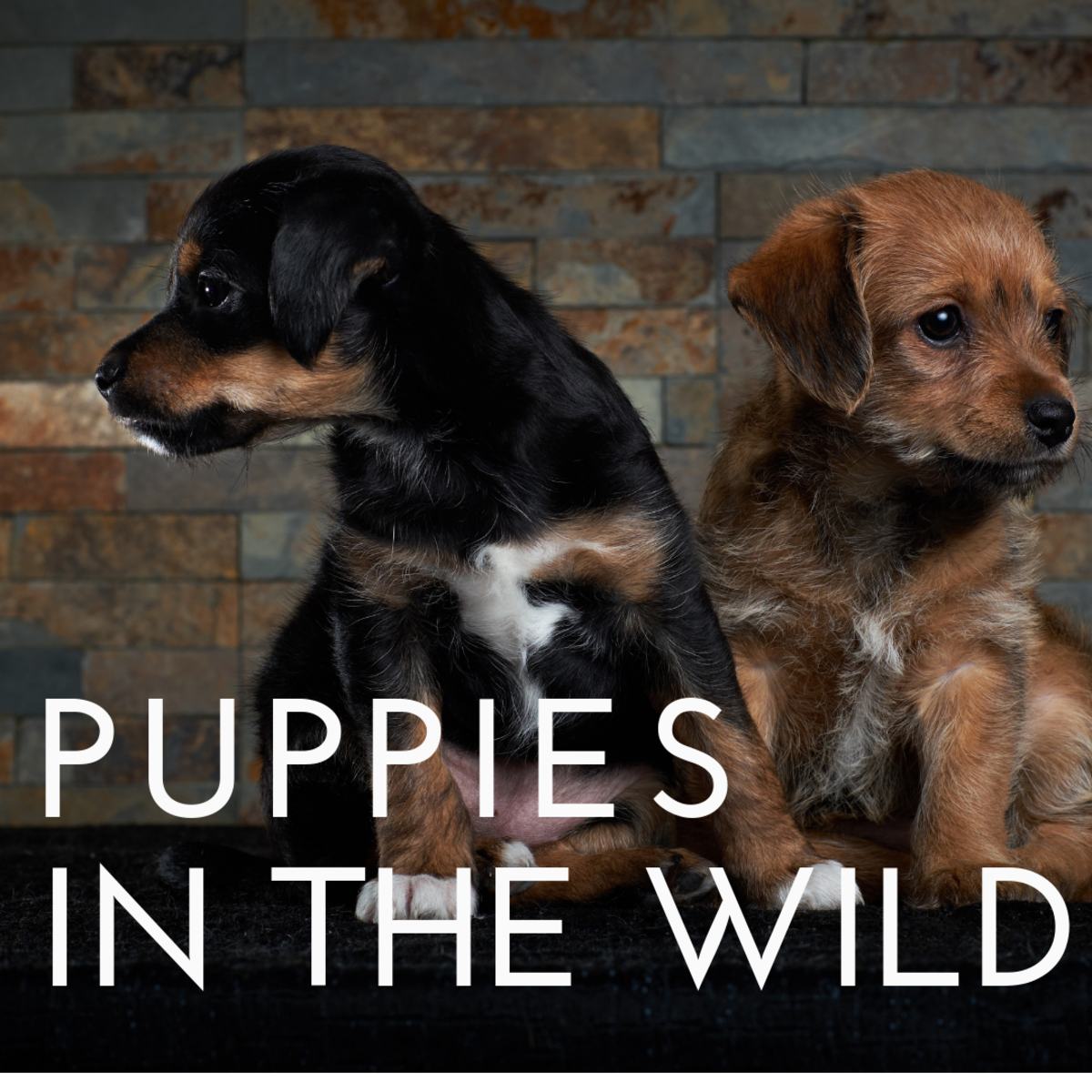 How Were Puppies Raised in the Wild