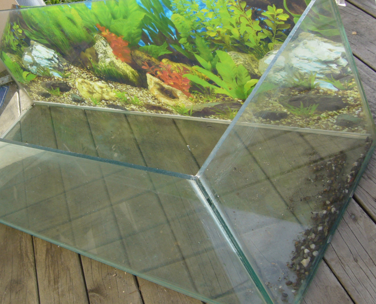 How to safely clean a second hand fish tank or aquarium for How to fix a leaking fish tank