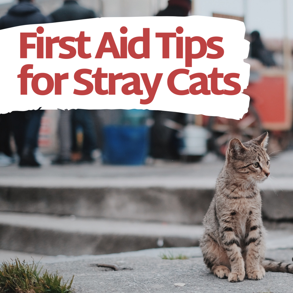 How to Help Treat a Stray Cat's Wound