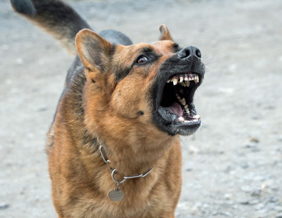 Do you know the warning signs of an aggressive or dangerous dog?