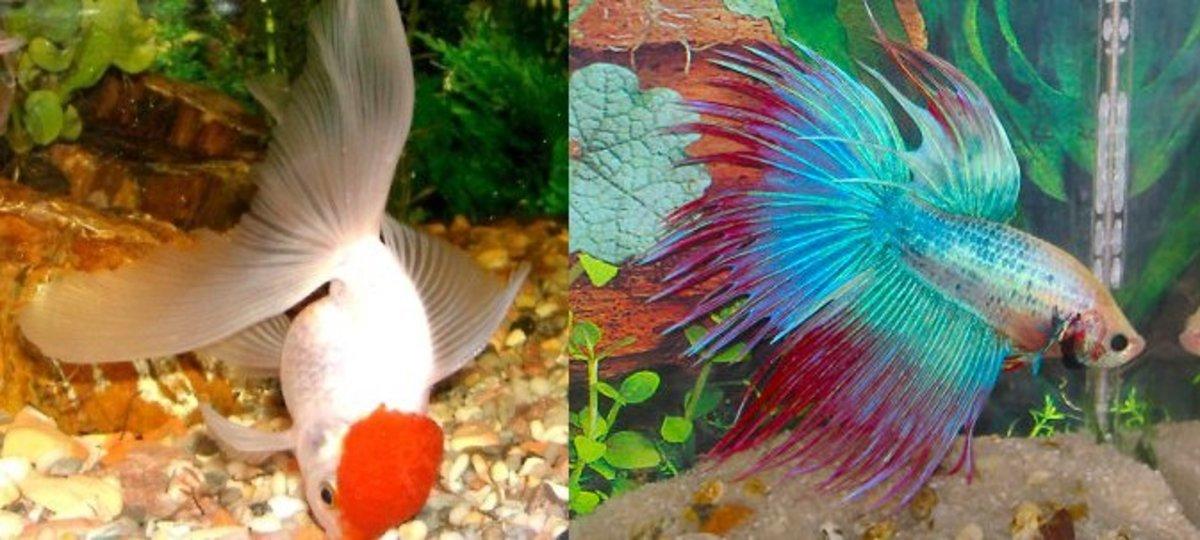 Water Fish Names Fish or Cold Water Fish