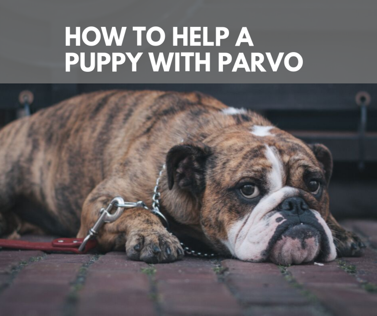 How to Help a Puppy With Parvo