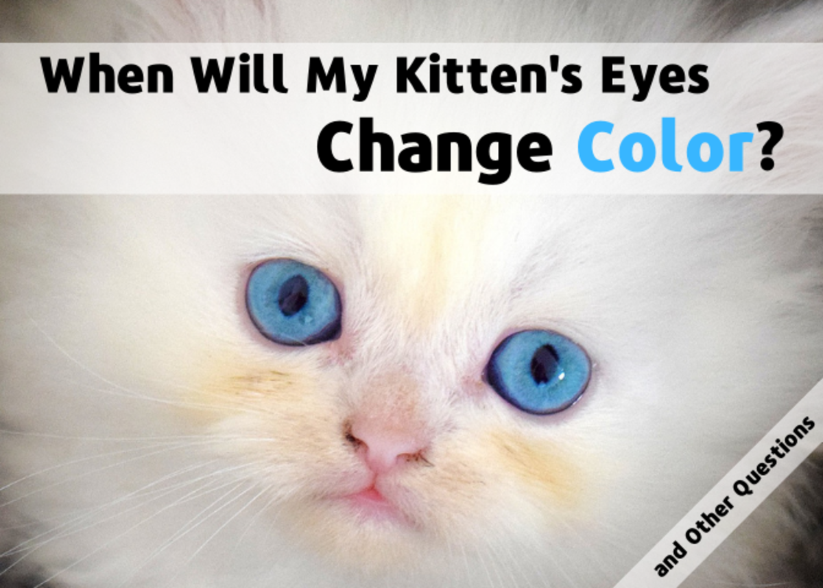 Get answers to commonly asked questions about kittens, such as when their eyes change color and when they can be separated from their mother.