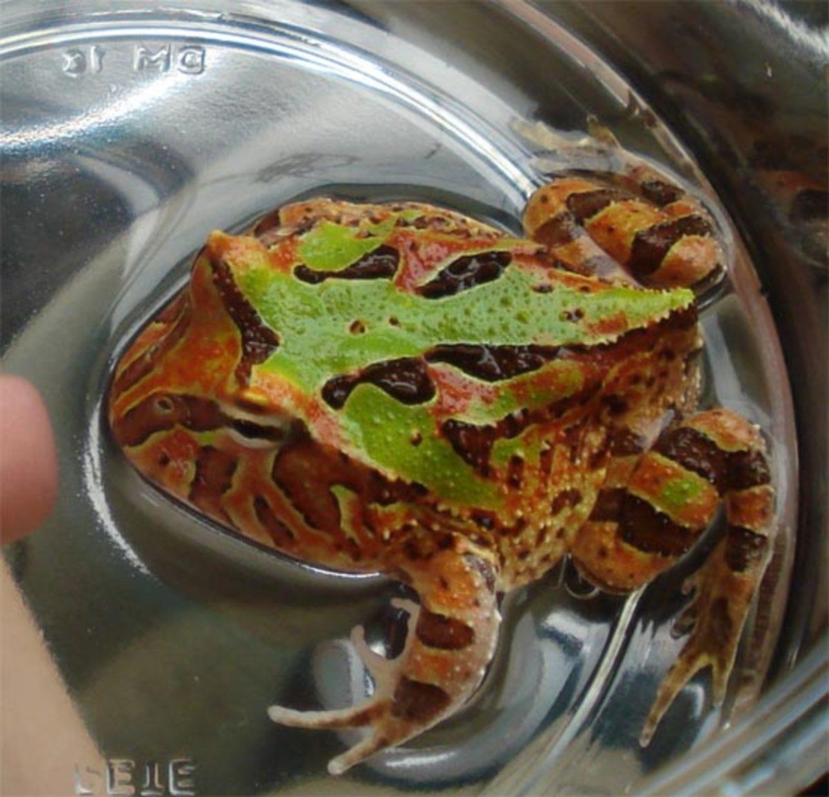 pac-man-frog-health