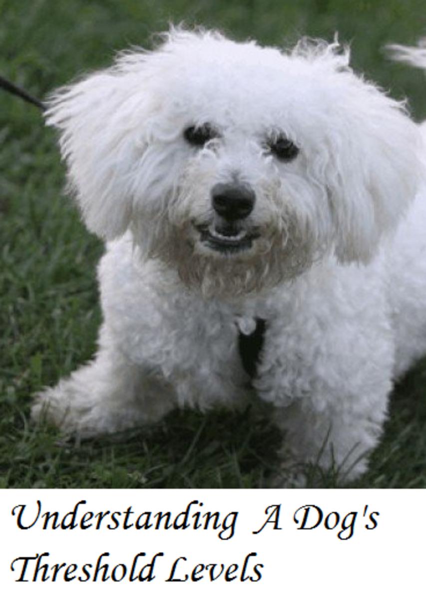 Understanding Dog Threshold Levels