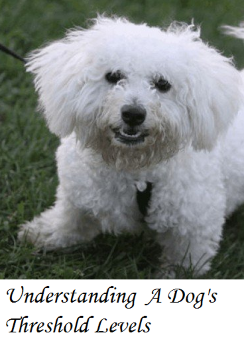 Dog Behavior: Understanding Dog Threshold Levels