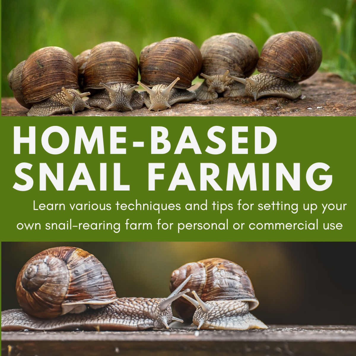 This guide will provide you with all the information you need to know to start your own snail-rearing farm in your own home or backyard.
