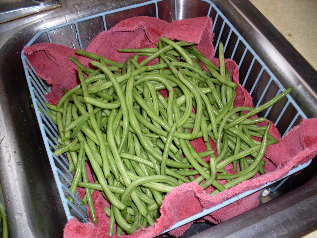 I started with French Filet green beans, a super-crisp, sweet bean perfect for pickling and regular snap bean recipes.