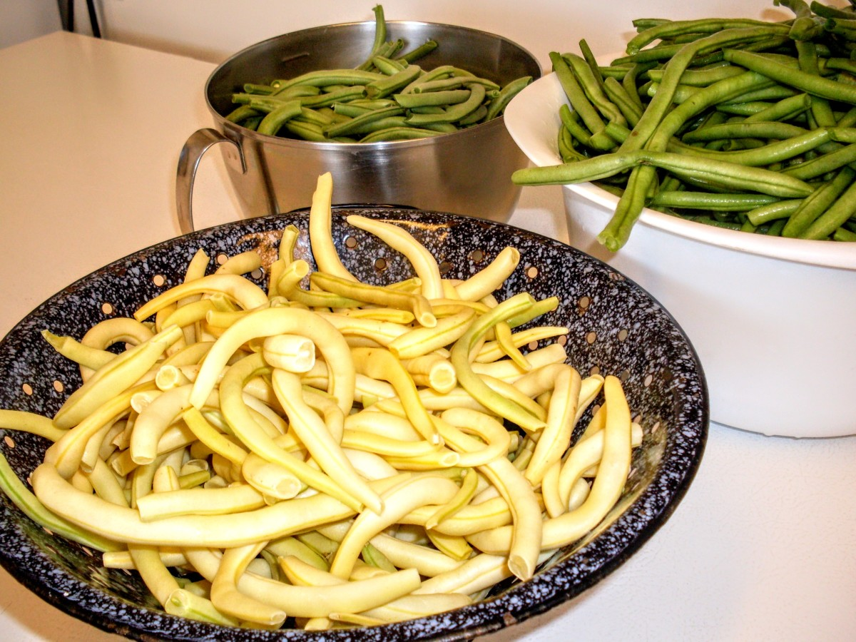 Last summer (2009), I canned three different varieties of snap beans: two overgrown French Filet types (oops) and a Yellow Wax variety.
