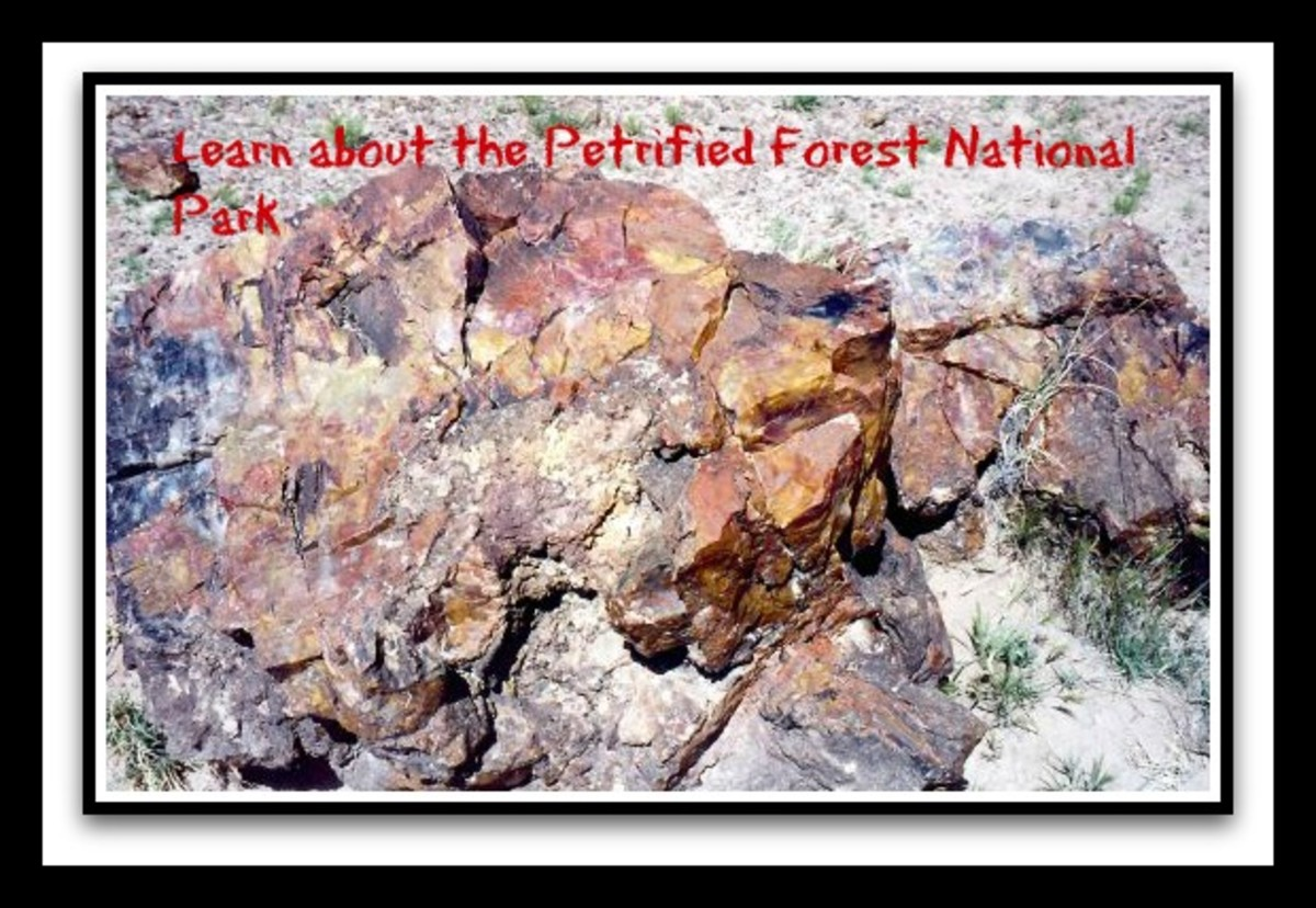 Petrified wood photo from the Petrified Forest National Park in Arizona.