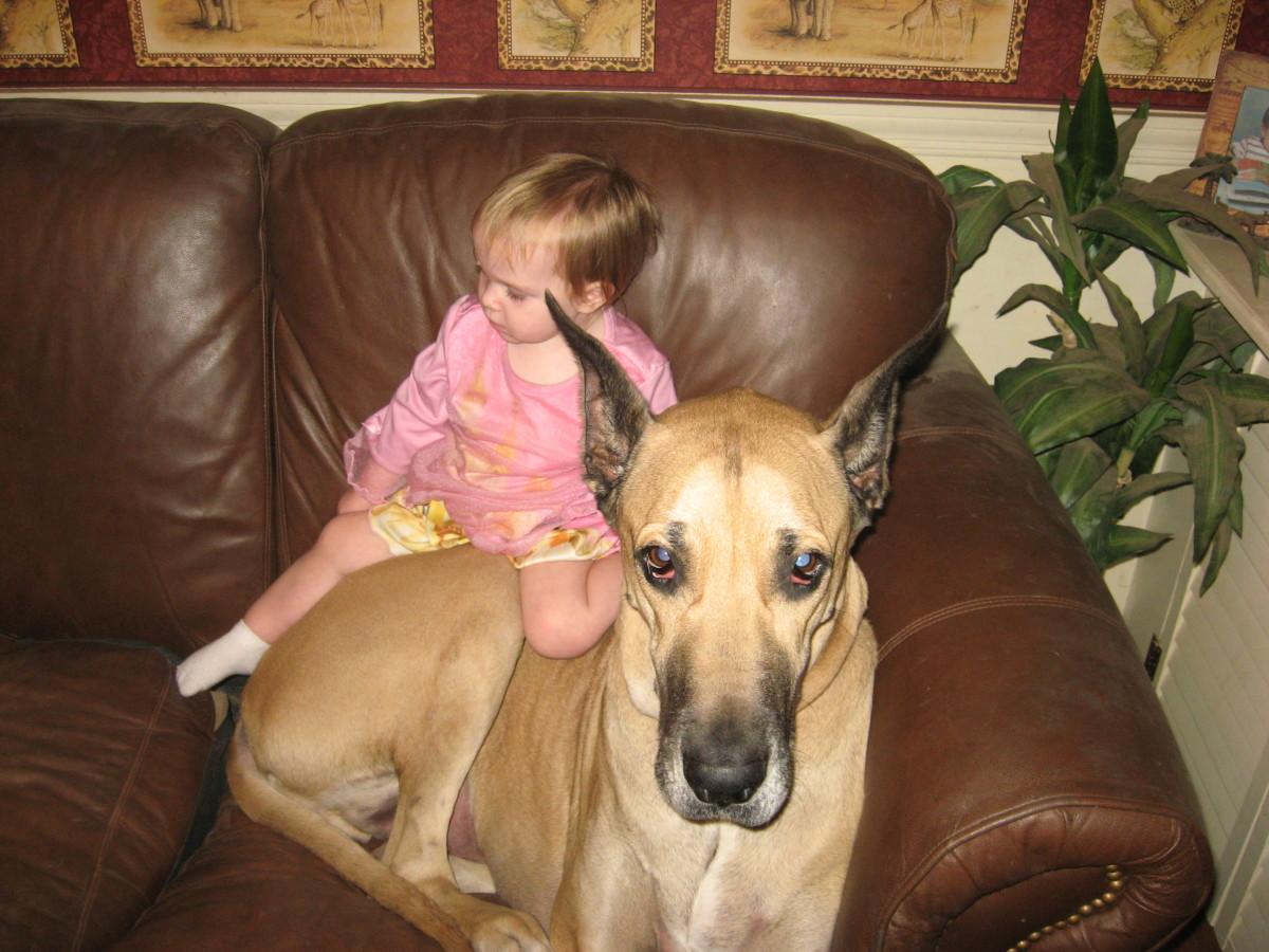 Ten Best Family Dogs for Kids