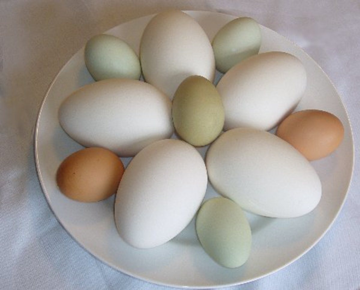 A mixed flock of eggs, a sure supply for all your breakfast and baking needs.
