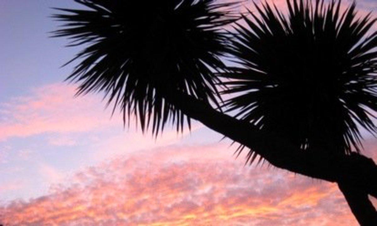 California sunset / E. A. Wright 2010