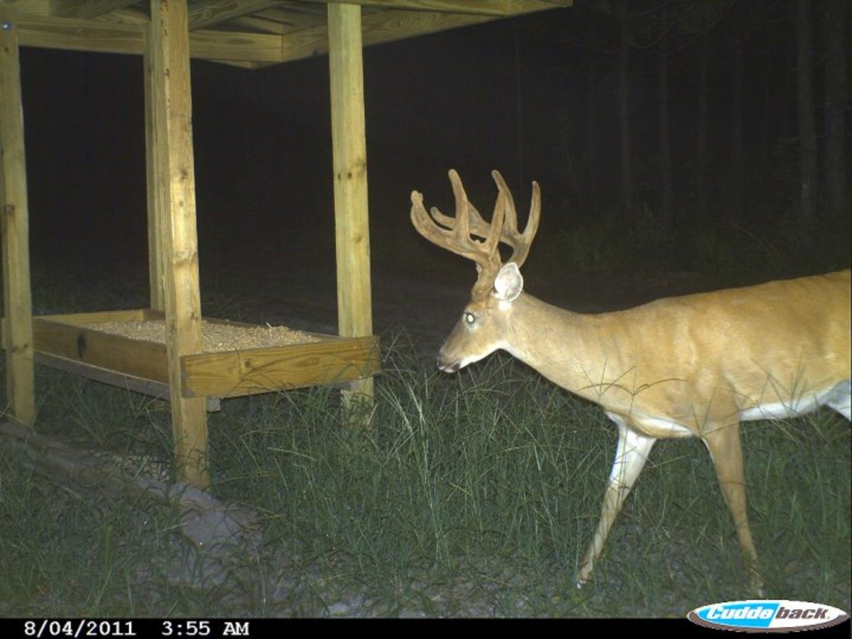 Mature whitetails are hard to fool!