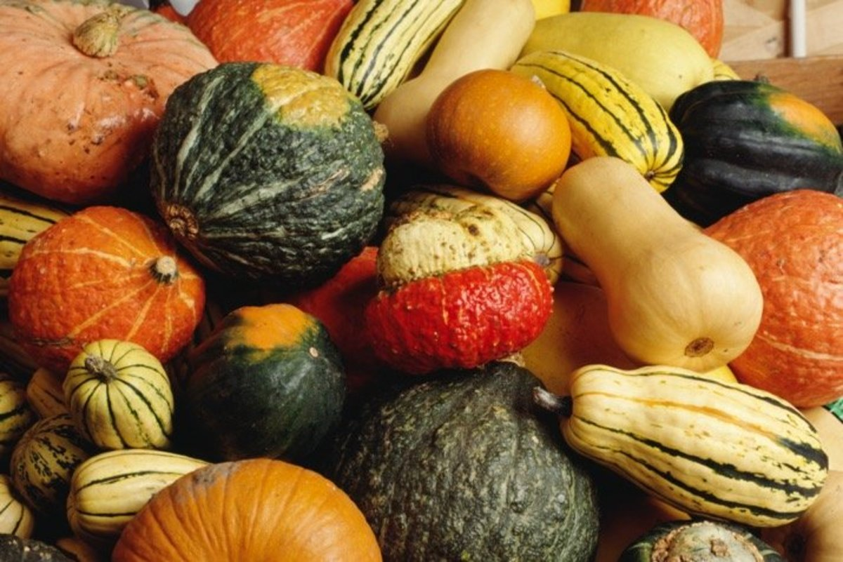 How to Can Winter Squashes and Pumpkins: An Illustrated Guide