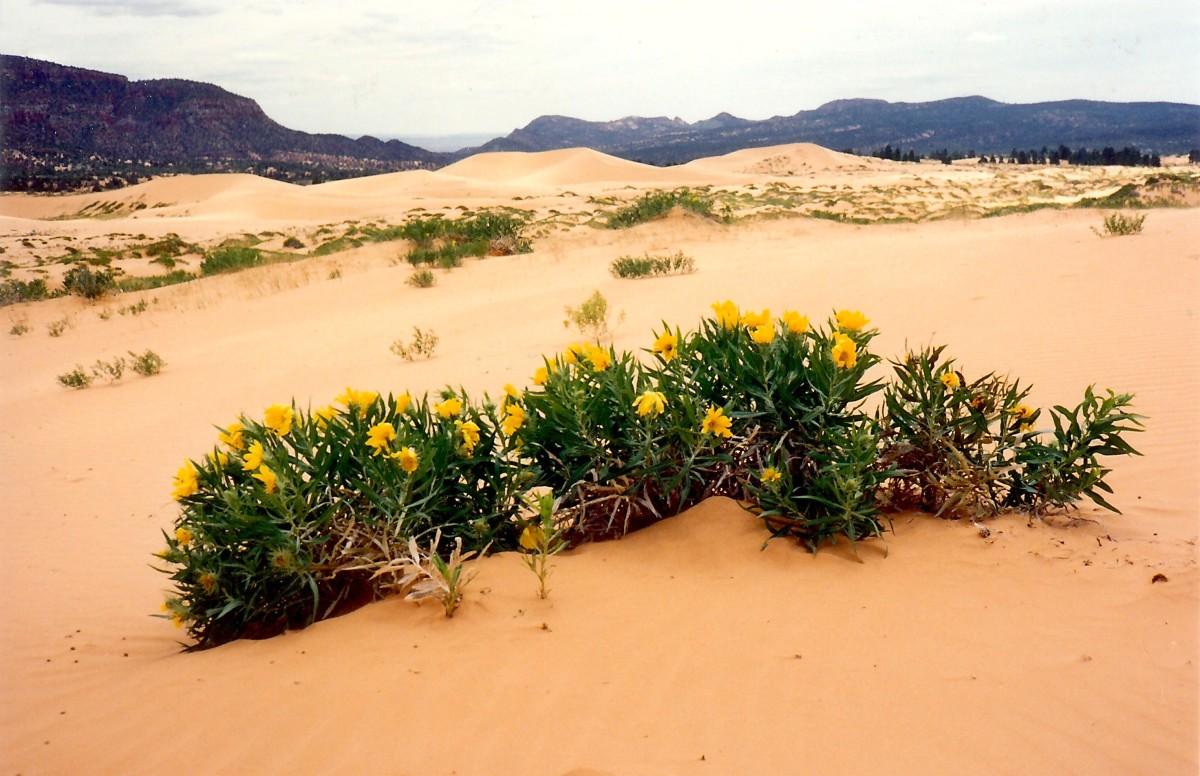 Coral Pink Sand Dunes State Park in Utah - Recreation!