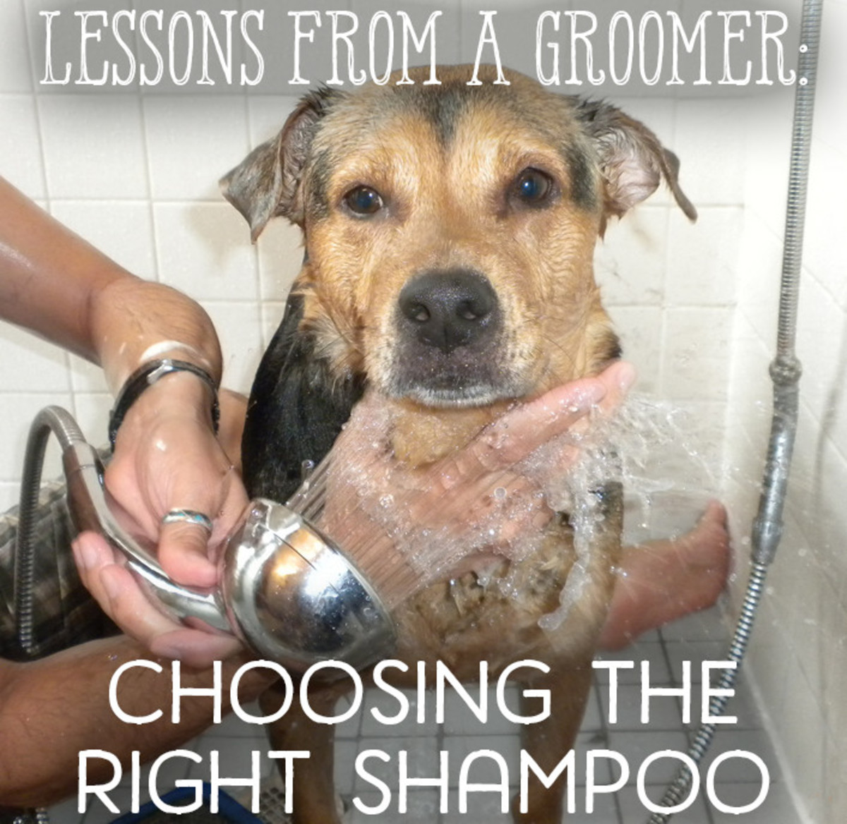 How to choose the shampoo that's best for your dog.