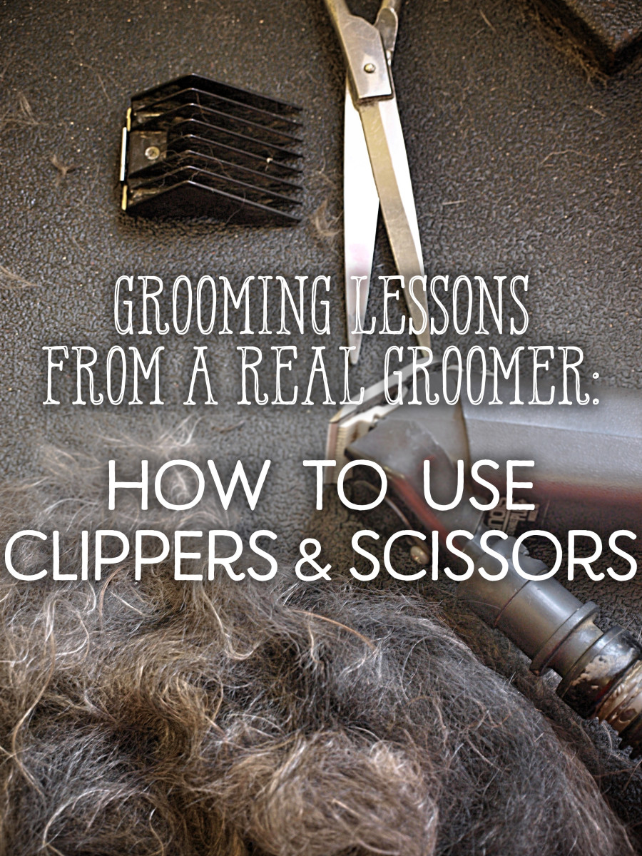 Lessons From a Groomer: How to Use Scissors and Clippers