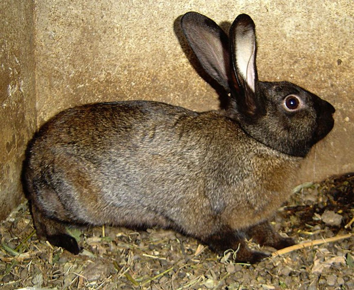 Cold Weather Care for Outdoor Rabbits