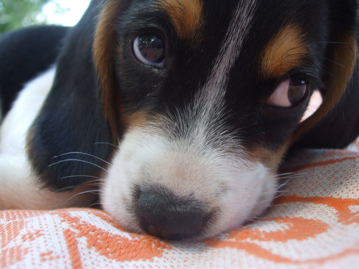 The Five Best Small Dog Breeds For Families With Young Children