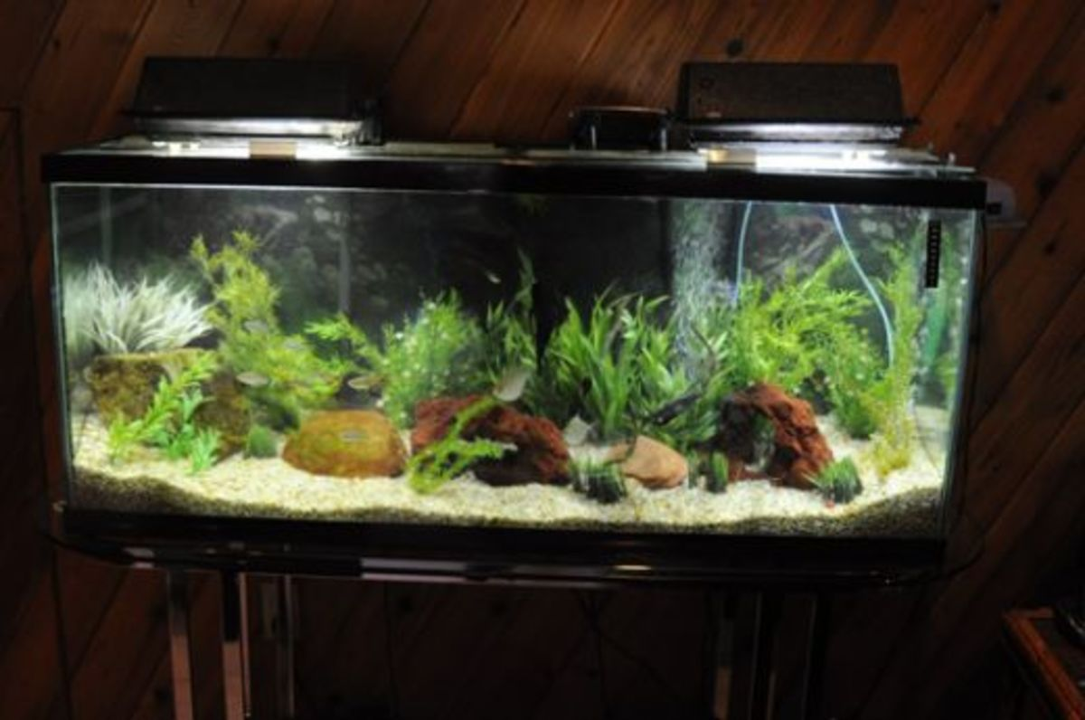How You Can Have A Healthy Aquarium Through Simple  Water Changes And Easy Maintenance
