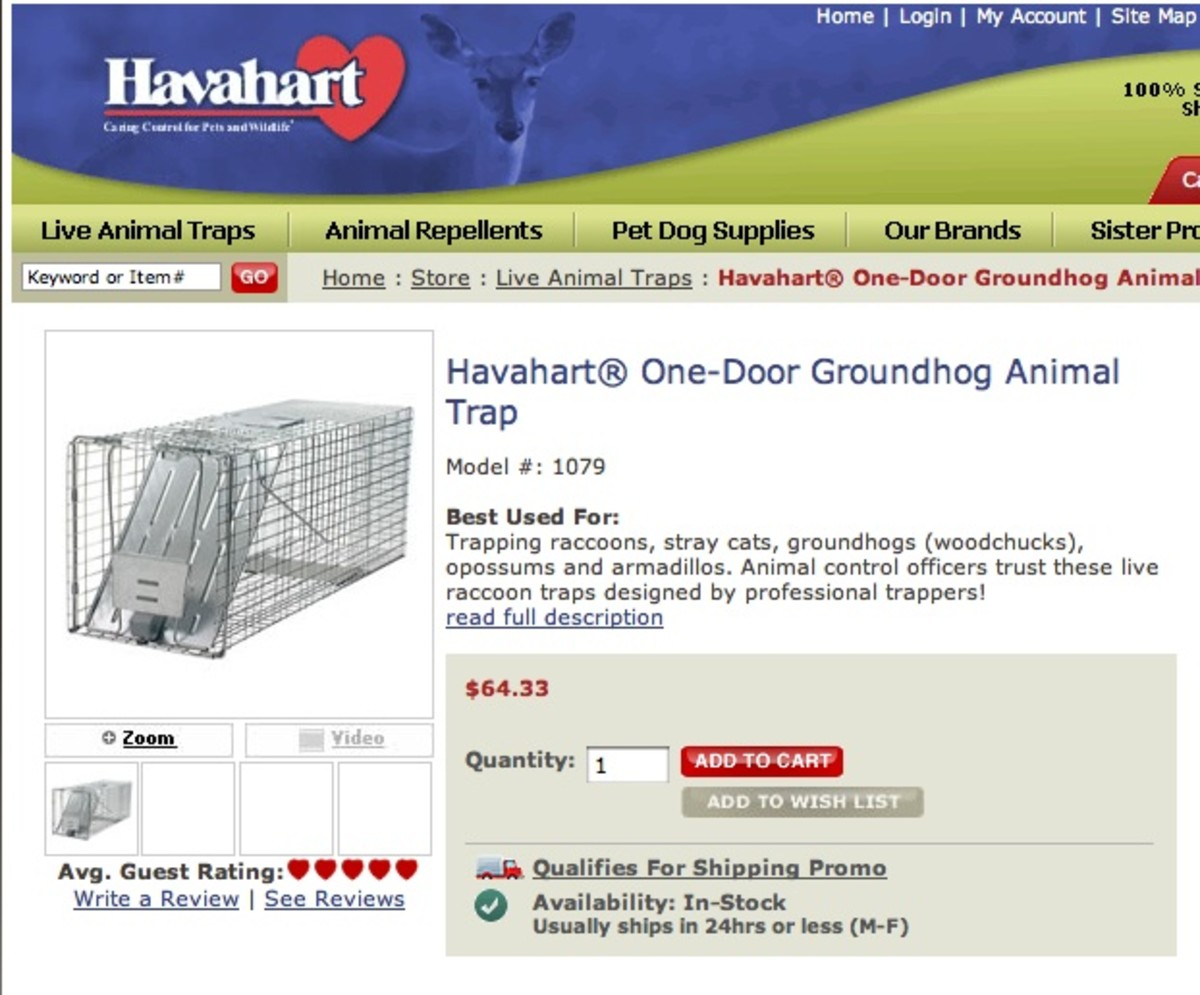 How to Safely Trap & Release Groundhogs, Possums & Other Native Animals