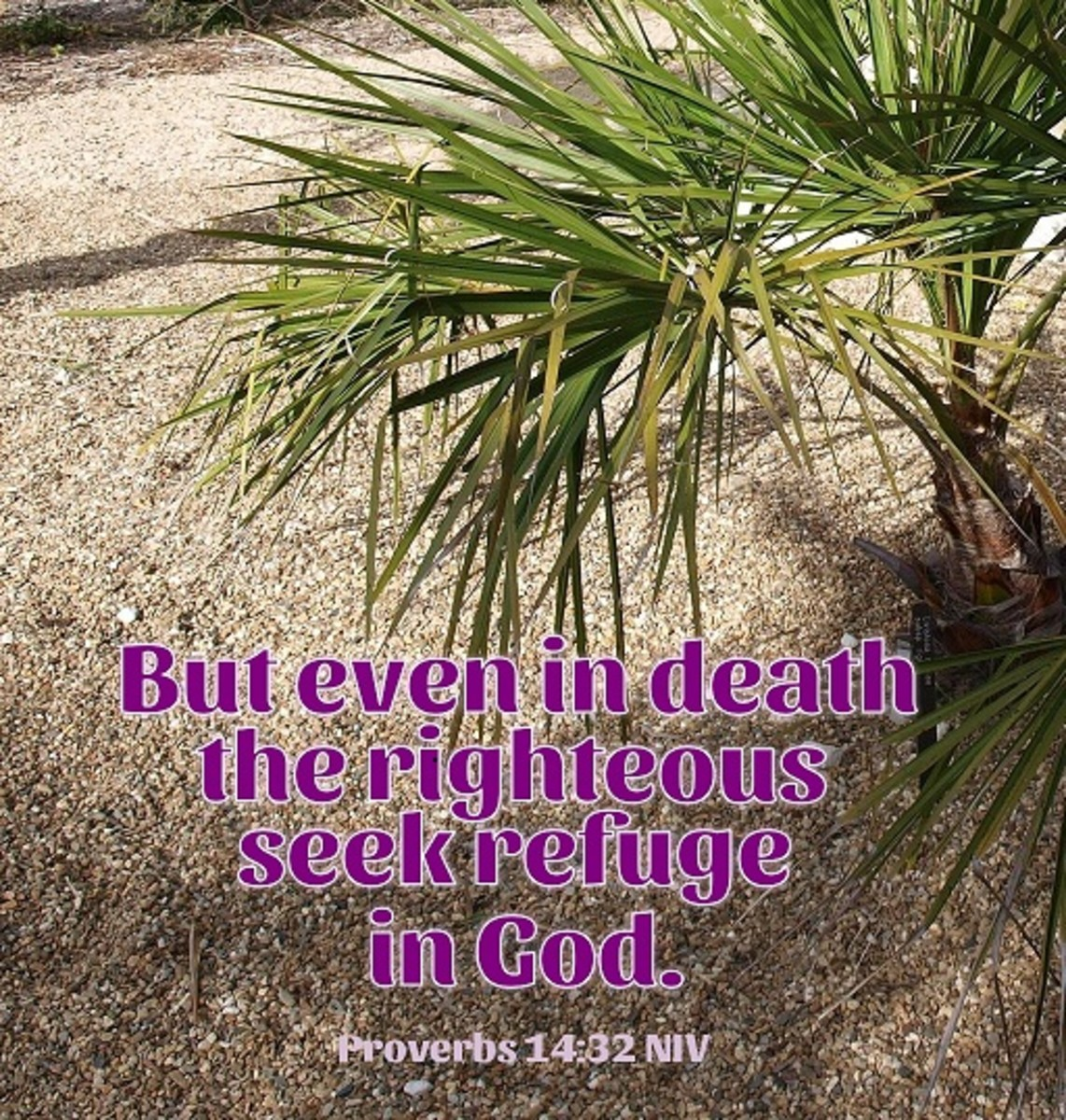 But even in death the righteous seek refuge in God.