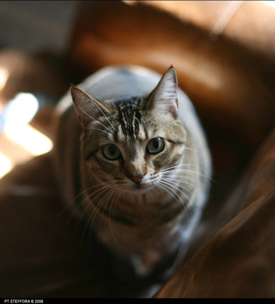 Cat Language: Learn What Your Cat Is Saying & How to 'Talk' to Them