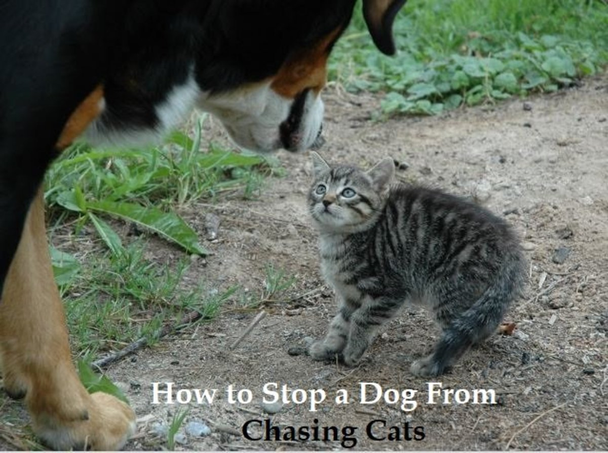 How to Stop a Dog From Chasing Cats