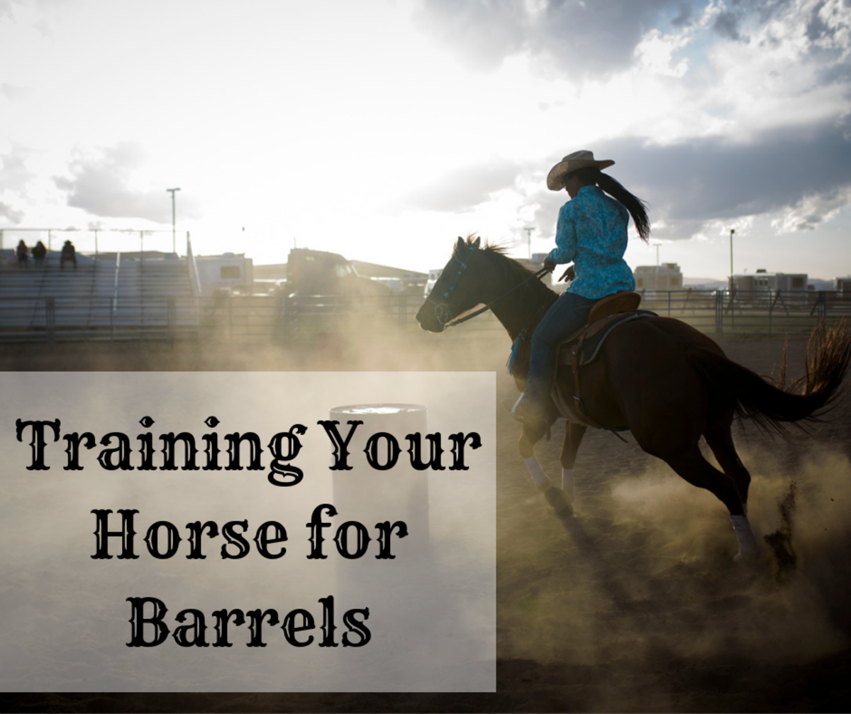 Being a professional cowgirl means knowing how to train a horse.