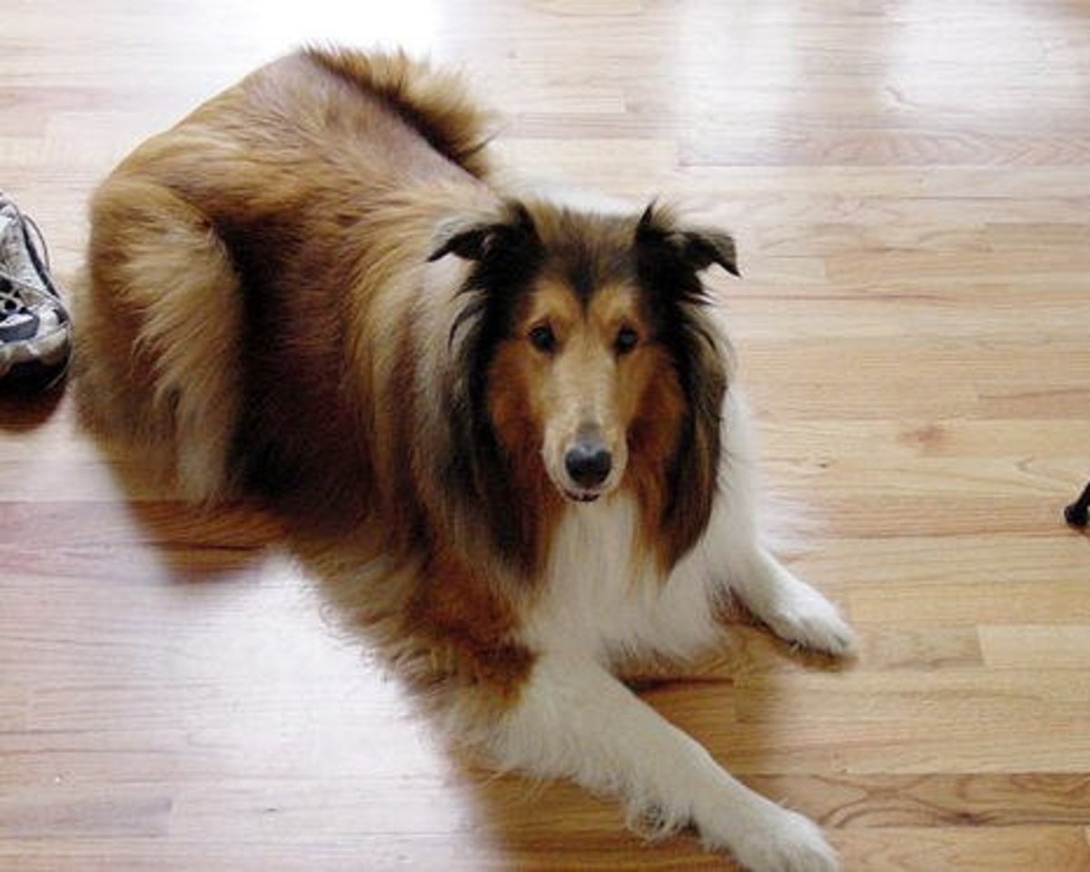 Best Pet Friendly Flooring Options For Dogs Dengarden